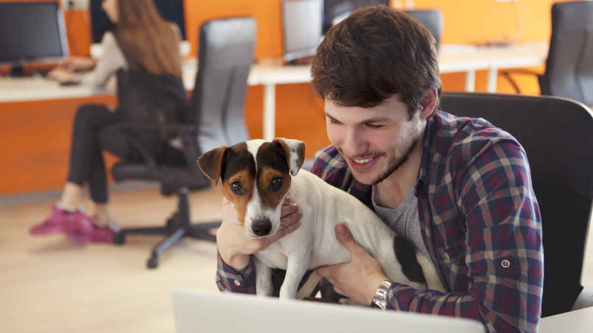 How to Be a Pet-Friendly Employer